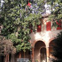 FERRARA: Potatura in Tree-Climbing su Magnolia Grandiflora