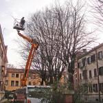 FERRARA: Intervento su alberatura in cortile condominiale