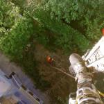 Punto di vista dell' operatore durante l'abbattimento controllato di un Abete Rosso