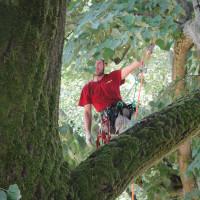 RAVENNA: Potatura in Tree-Climbing su Tiglio