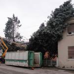 BOLOGNA: Cipressi dell'Arizona appoggiati a un caseggiato
